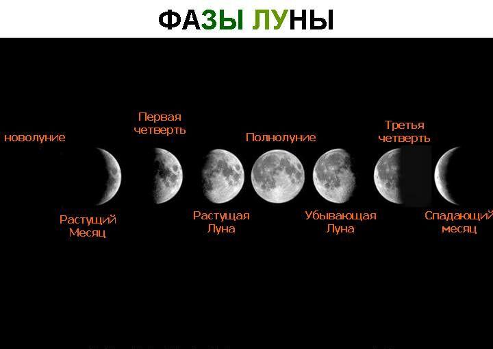 Фазы роста луны для стрижки